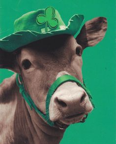 Green is such a flattering color for cows.