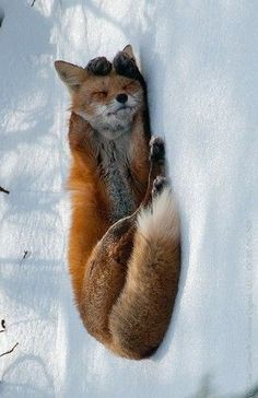 This is literally the cutest fox ever!