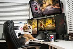 Dogs!!! Man (or dog?..) those battlestations!!