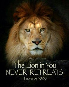 Jesus is the Lion of the Tribe of Judah Lion Quotes, Bible Quotes, Quotes Quotes, Quotes With Lions, Jesus Quotes, True Quotes, Tattoo Quotes, Proverbs 30, Tribe Of Judah