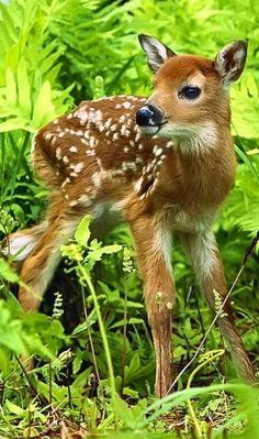 Baby deer via www.sweetamazingpics.blogspot.in