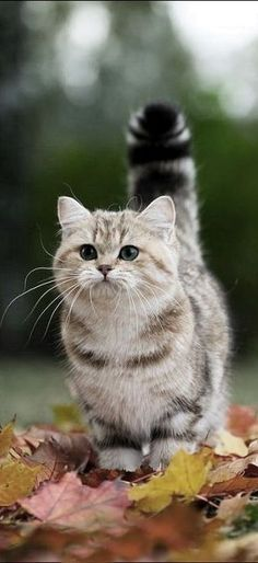 10 #Cute #Cat Pictures for Your Day