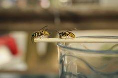 7 geniale Hausmittel, mit denen ihr lästige Wespen vertreiben könnt