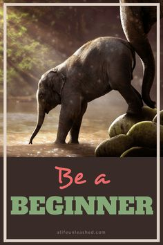 Be a Beginner | Life, Unleashed