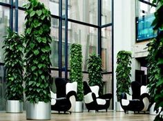 philodendron totem - Google Search