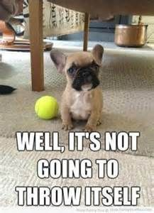 funny dog pictures with captions - Bing Images #Dogs