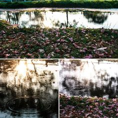 Fallen blooms at the lake Lake Water, Water Flowers, Men's Grooming, Health And Beauty, Thailand, Photo Wall, Bloom, Fitness, Frame