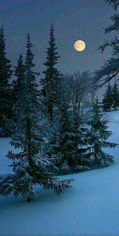 Full moon on a winter's night.