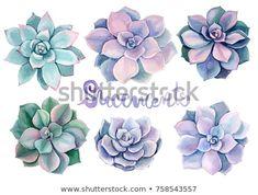 Bouquet Of Succulents Women/'s Tee Image by Shutterstock