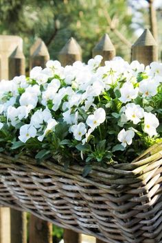 gardens decking Easy-care balcony plants - beautify the balcony easily and quickly balcony make pansies white flowers Balcony Flowers, Balcony Plants, Balcony Garden, Potted Plants, Moon Garden, Dream Garden, White Flowers, Beautiful Flowers, Tropical Flowers