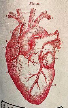 #illustration #heart