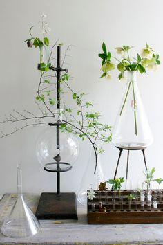 pflanzenlabor