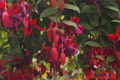 En Jardines Butchart. Victoria Canadá.
