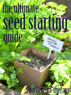 The Ultimate Seed Starting Guide - All you need to know to start seeds indoors and out! Garden Therapy
