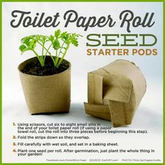 Let's get planting. Great little planting project for the kids.