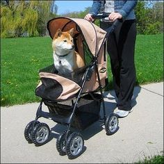 Just what So Good About The use of a Pet Strollers for Dogs? Cat Stroller, Jogging Stroller, Large Dogs, Small Dogs, Dog Owners, Baby Strollers, Walking, Pets, Animals