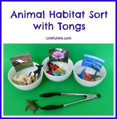 This animal habitat sort activity uses tongs for fine motor skills practice.