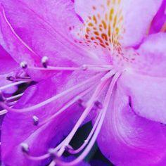 #kwiat #cudnatury #nature by isabelle.willard66