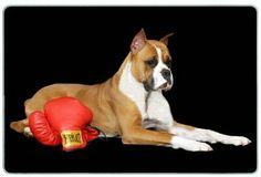 """Boxer Cutting Board by Canine Designs. $29.95. Size: 8"""" x 11"""". Hygenic and easy to clean.. Scratch Resistant - imprinted on back. Made of tempered glass making it virtually unbreakable.. Heat resistant.. Our beautiful, dog breed cutting boards will enhance any kitchen. They make great gifts, are made of tempered glass and measure 9"""" x 12"""". They are heat resistant, scratch resistant, virtually unbreakable, easily cleaned and dishwasher safe."""
