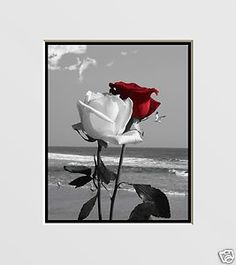 Red Wall Decor black, white & red wall decor | red rose wall art | for the home