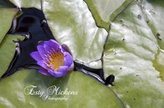 The purple Flower www.estymickensphotography.com