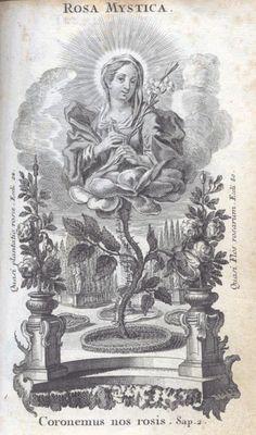 Rosa Mística. José Armando Flores Vázquez