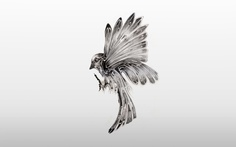 Si Scott — Bird in flight illustration