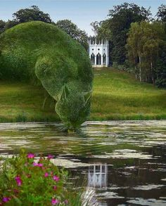 Topiary Cat, done by John Brooker, a retiree aged 75 who lives in Norfolk, UK. Topiary Cat Drinking from a Lake by Rich Saunders Topiary Garden, Garden Art, Garden Design, Garden Beds, Richard Saunders, Parcs, Dream Garden, Lake Garden, Belle Photo