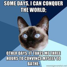 Chronic Illness Cat