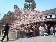 桜と蔵屋敷と着物姿