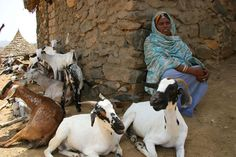 Sadia Kasam, a goat herder in Adi Abi village, Eritrea. She was supported by a project to improve the breeding of her goats. The sale of milk, meat and kid goats provides Sadia with a valuable source of income.