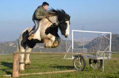 irish cob stallion # allevamento irish cob # danny boy irish cob # irish cob italia # www.cabiancadellabbadessa.it #