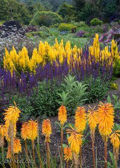Mendocino Coast Botanical Gardens, Fort Bragg, California by paulgillphoto, via Flickr