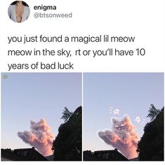 I just think the cloud is cute lol Animal Memes, Funny Animals, Cute Animals, Dankest Memes, Funny Memes, Funny Fails, Funny Videos, Funny Cute, Hilarious