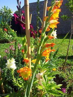 palmas flores
