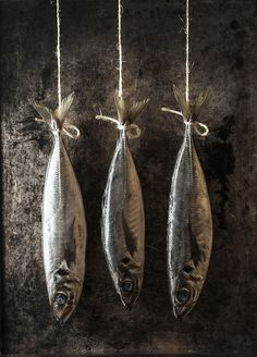 Horse mackerel by Nick Hawkes