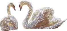 zwanen | Glitter gifs » Swan