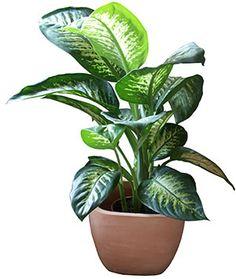 kasvien hoito