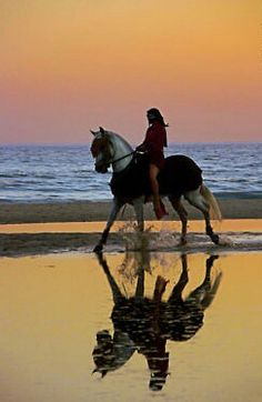 Heaven on earth♡ Horseback riding on the beach♡