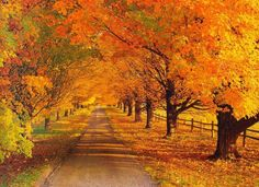 Güneşli bir son bahar günü insanı hayallere götüren bu patikada yürümek ne güzel