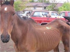 Demand Justice for Horse Slowly Starved to Death PETITION - Care2 News Network
