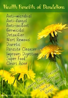 Dandelion Health Benefits #health #dandelions #herbs