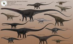 Sauropods of the Morrison Formation by PaleoGuy on DeviantArt