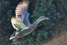 Taking Flight by Kristin Hyde