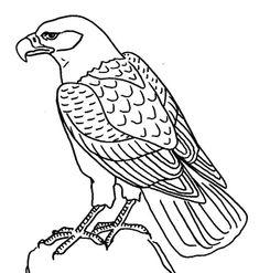 Dibujos infantiles para colorear de águilas