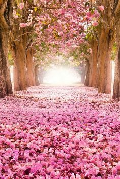 Pretty-in-pink tree tunnel! Pretty In Pink, Beautiful Flowers, World's Most Beautiful, Beautiful World, Beautiful Places, Absolutely Gorgeous, Wonderful World, Tree Tunnel, Jolie Photo