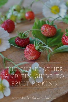 The Fur Feather and Fin Guide To Fruit Picking Fruit Picking, Interesting Information, Summer Fruit, Country Life, Fun Facts, Feather, Strawberry, Wildlife, Outdoors