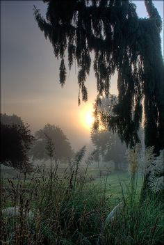 Sunrise in morning mist, Beacon Hill Park, BC, Canada