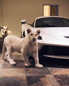 White Ferrari and Lion Pets Luxury Life Men's Goals Sport Cars - luxus Beautiful Creatures, Animals Beautiful, Animals Amazing, Baby Animals, Cute Animals, Rich Kids Of Instagram, Exotic Pets, Big Cats, Sport Cars