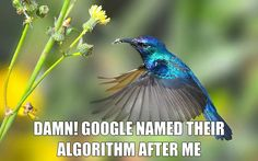 7 facts about Google's Hummingbird algorithm | Written by Subham Chhetri